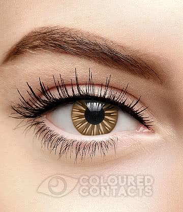 Dolly 90 Day Coloured Contact Lenses (Brown)
