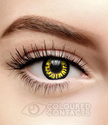 Wolf 90 Day Coloured Contact Lenses (Black/Yellow)
